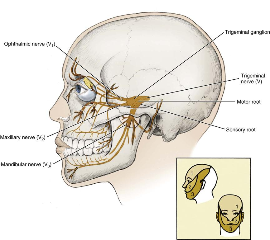 12. anatomic considerations | pocket dentistry, Human Body