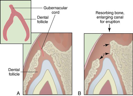 differential diagnosis of diseases of the oral mucosa english and german edition