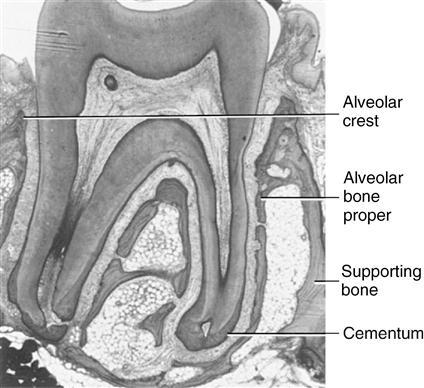 Veterinary Histology  vetmansouracom