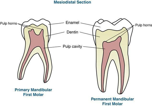 18 Primary Dentition Pocket Dentistry