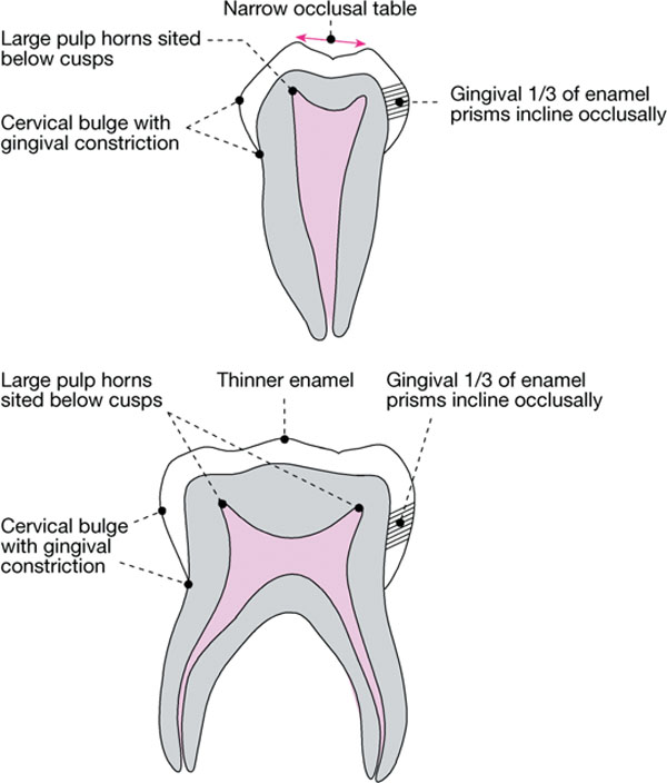5 Intracoronal Restorations For Posterior Primary Teeth Pocket