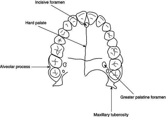 bone diagrams to label 9 head and neck anatomy and physiology pocket dentistry  9 head and neck anatomy and physiology pocket dentistry