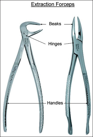 12 Extraction Forceps Pocket Dentistry