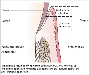 phillips dental materials pdf free