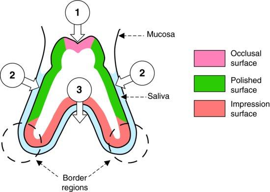 4: Stability of Dentures | Pocket Dentistry
