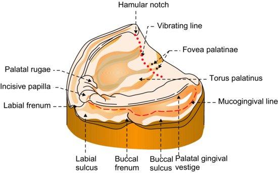 10: Impressions   Pocket Dentistry