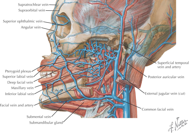 11: Nose and Nasal Cavity | Pocket Dentistry