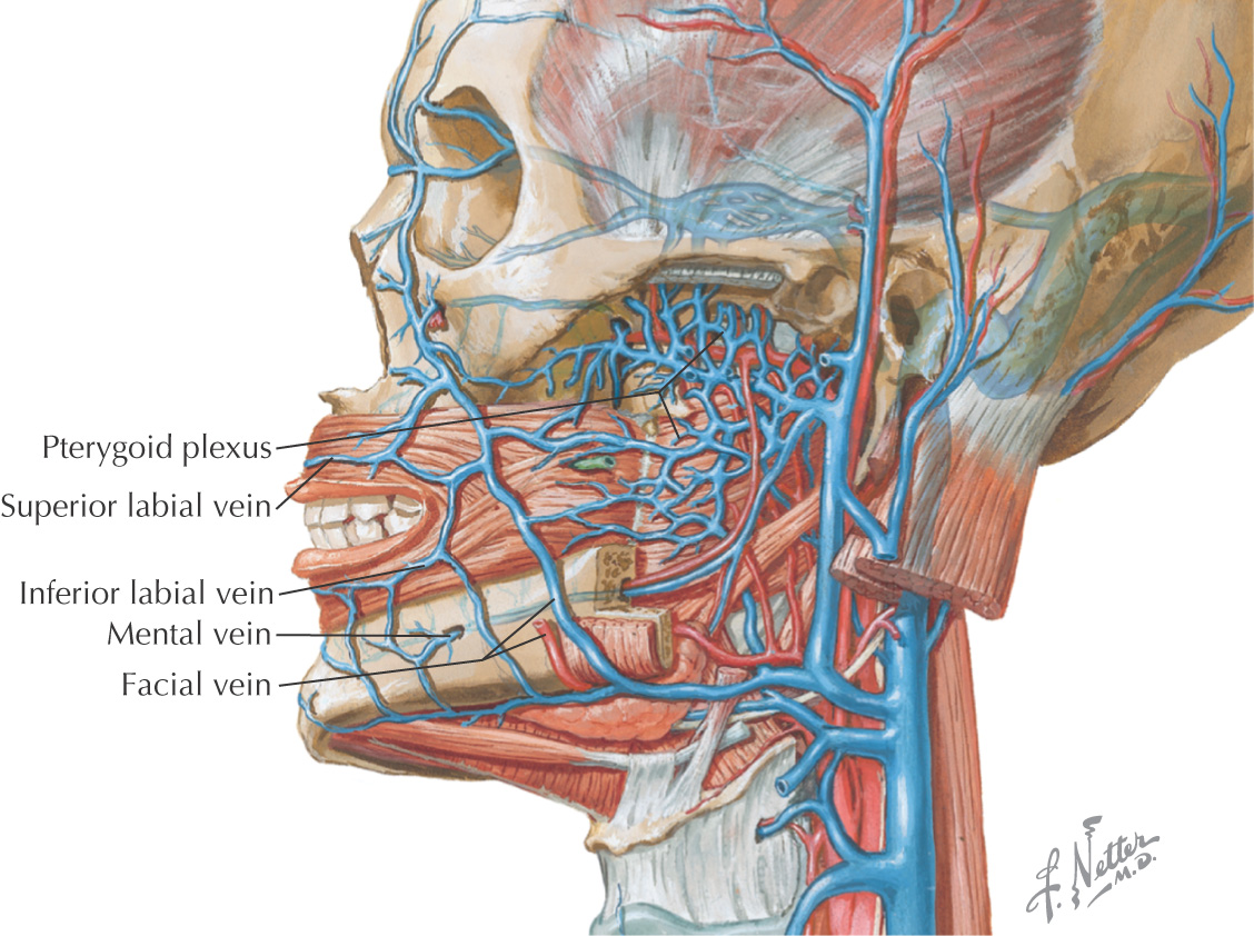 13 Oral Cavity Pocket Dentistry