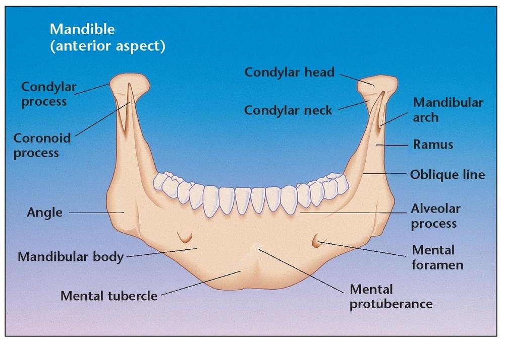 6 – Harvesting Bone from the Mandibular Symphysis | Pocket Dentistry