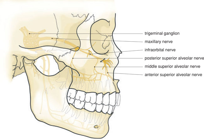 5 Local Anaesthesia In The Upper Jaw Pocket Dentistry It was established that the supraorbital notch and the supraorbital foramen are characterized by a different frequency of occurrence and asymmetry of location. 5 local anaesthesia in the upper jaw