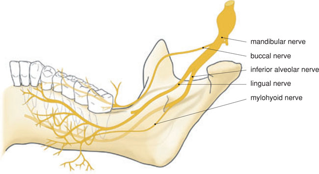 6 Local Anaesthesia In The Lower Jaw Pocket Dentistry