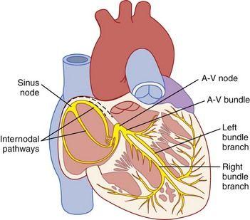 5: Cardiac Arrhythmias | Pocket Dentistry
