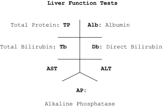 Liver function test diagram wiring library 45 liver function tests hepatitis and cirrhosis assessment rh pocketdentistry com liver disease symptoms liver function ccuart Image collections